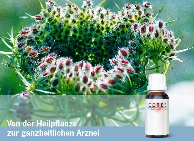 Ceres Heilmittel [Vita Drogerie Online-Shop]